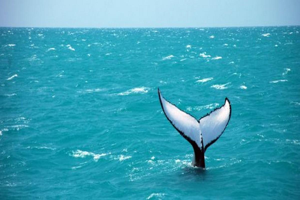 Destino Costa das Baleias - Bahia