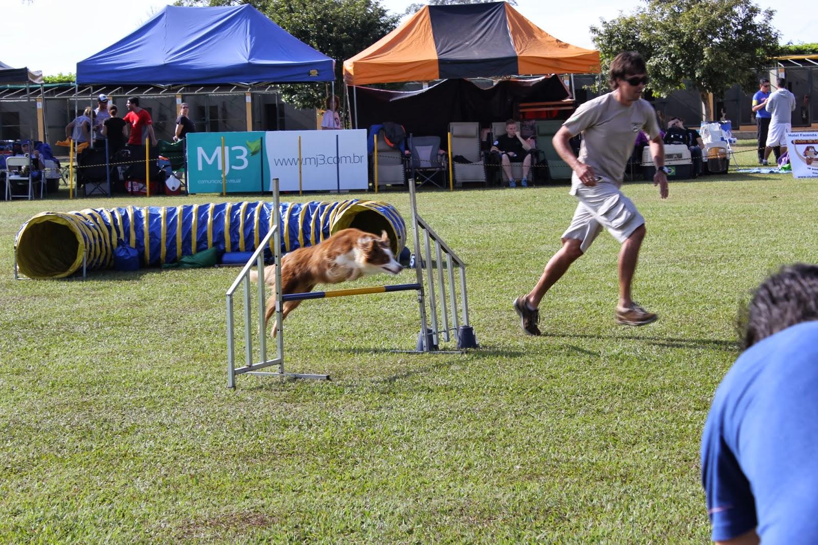 Clube de Cãompo Hotel Fazenda para Cachorros