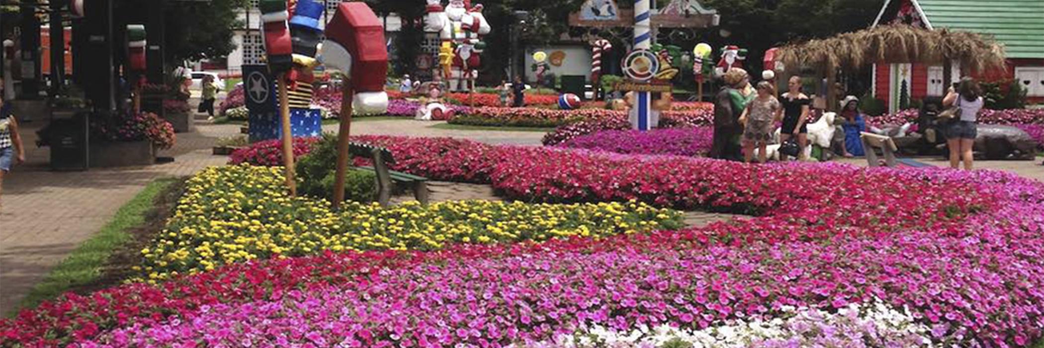 HOME ROTEIRO DA SERRA GAUCHA - RS - NOVA PETRÓPOLIS - foto jardim flores rosa
